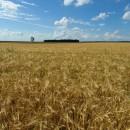2011 год для России обещает стать самым урожайным годом за последние десятилетия