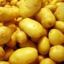 «Золотой картофель» динси и дыня «уоллес» Ланьчжоу
