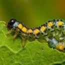Насколько эффективны инсектициды для уничтожения тли