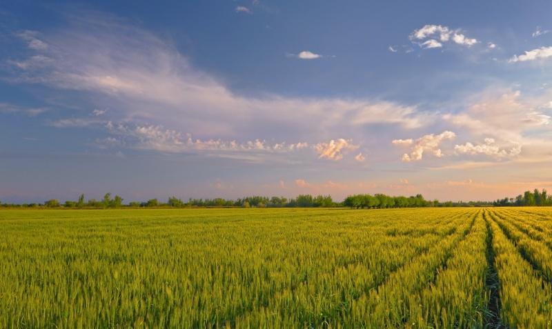 В Волгоградской области занимаются восстановлением пастбищ