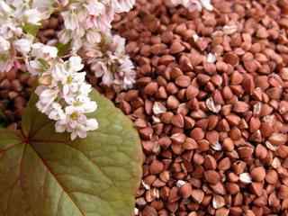 http://www.agroacadem.ru/wp-content/uploads/2012/05/94fda6be78.jpg